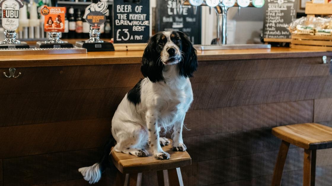 Dog Friendly Country Pub Warwickshire